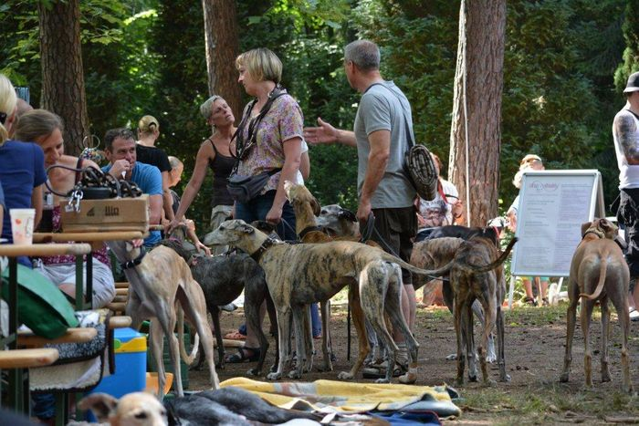 Galgos-in-Not_Sommertreffen_2014_044_01.jpg